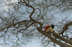 Падение с дерева - причина перелома руки