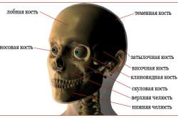 Расположение скуловой кости