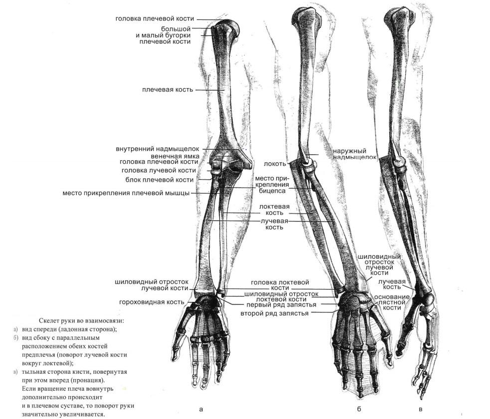 Перелом лучевой кости: лечение и первая помощь