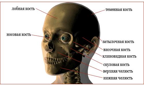 Перелом скуловой кости: симптомы, лечение и последствия