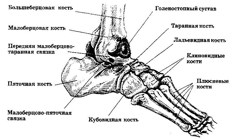 Перелом таранной кости: лечение, реабилитация и последствия