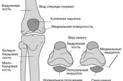 Схема расположения малой берцовой кости