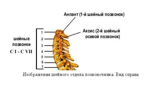 Упражнения для беременных 2 триместр при болях в пояснице