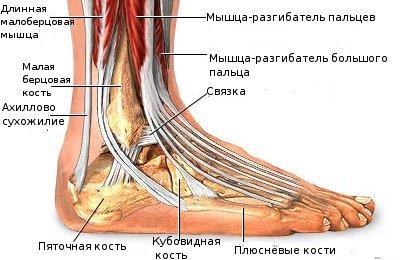перелом голеностопа когда можно наступать на ногу