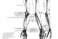 Строение скелета руки