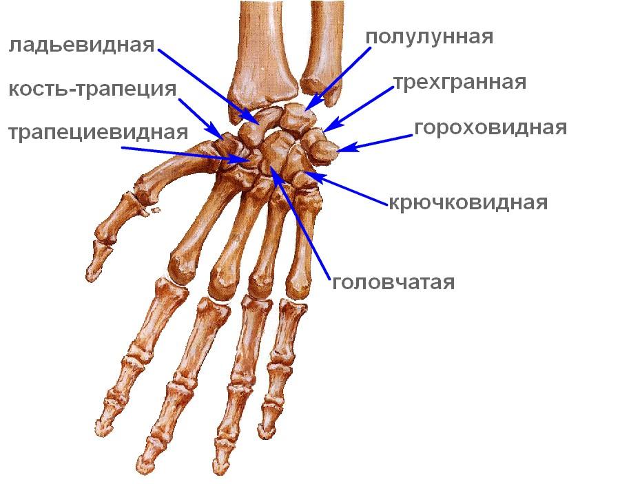 трехгранной связки запястного сустава